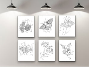 Oklahoma State Butterfly. Black Swallowtail Butterfly Line Art Print 1