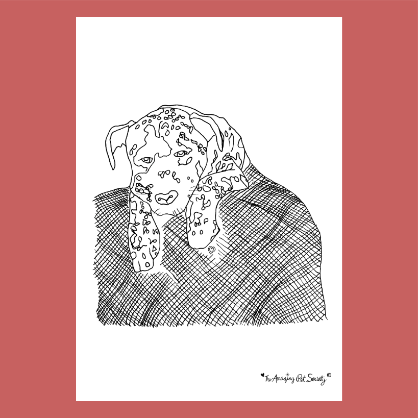 Cute Dog on a Blanket Coloring Page By Phylinda
