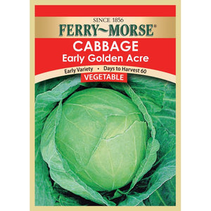 Cabbage Early Golden Acre Seeds