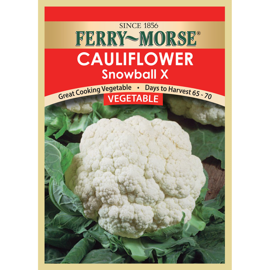 Cauliflower Snowball X Seeds