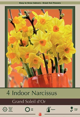 Narcissus tazetta 'Grand Soleil d'Or' Pack