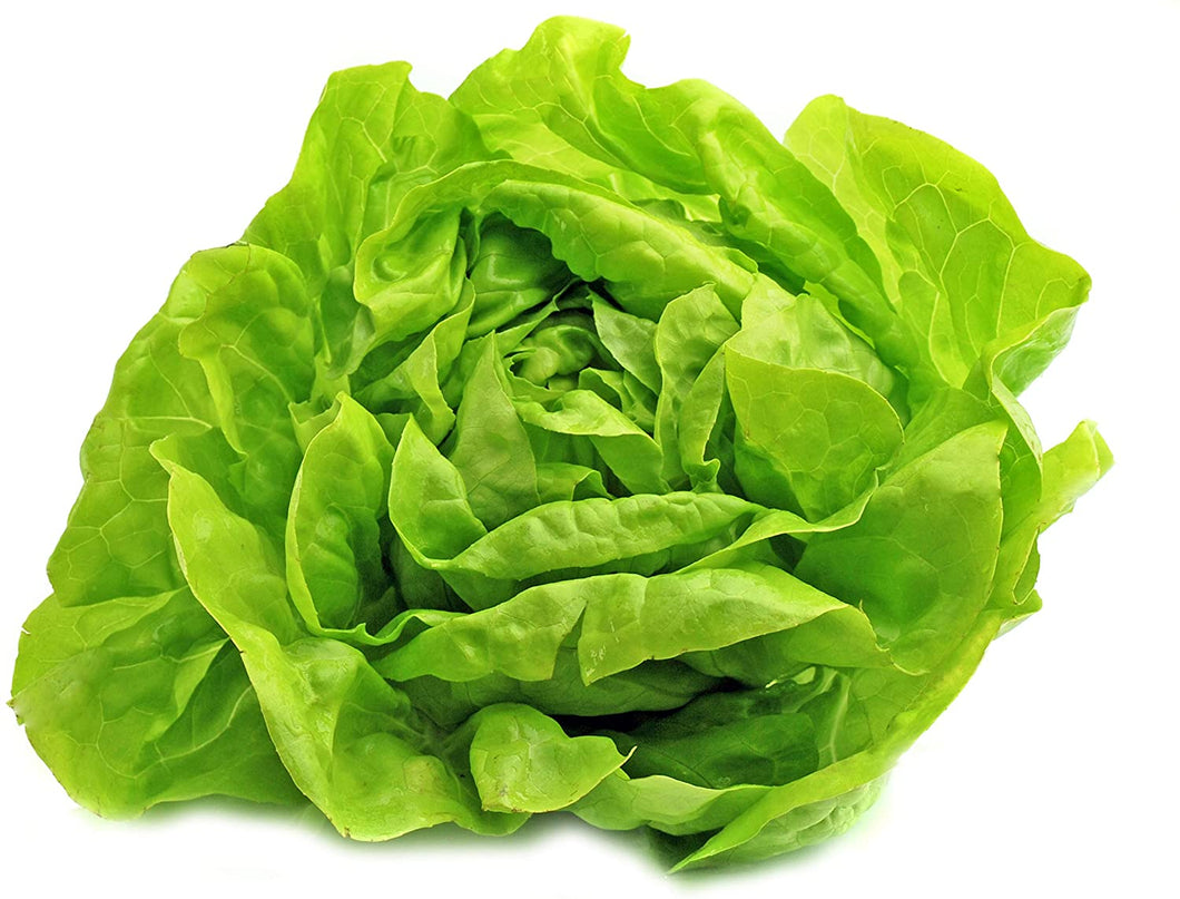 Lettuce Buttercrunch (Market Pack)