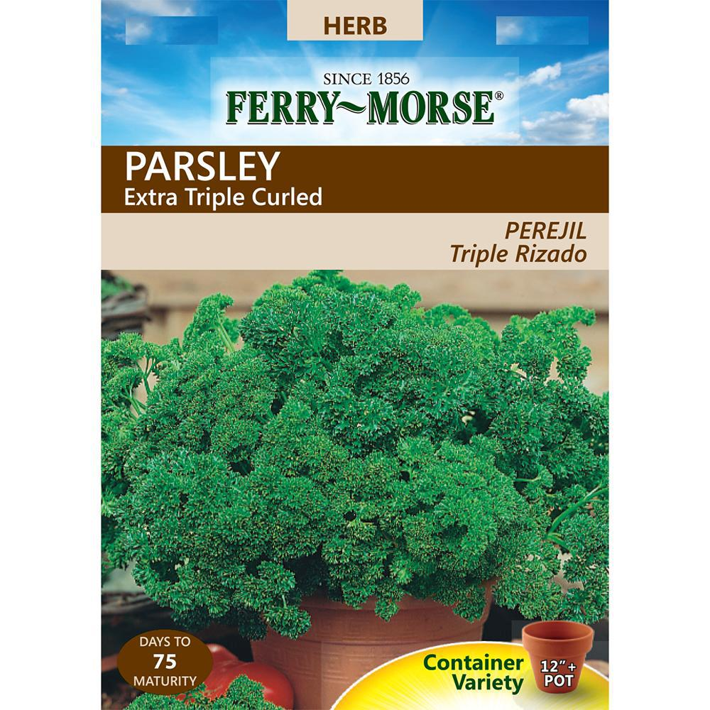 Parsley Extra Triple Curled Seeds