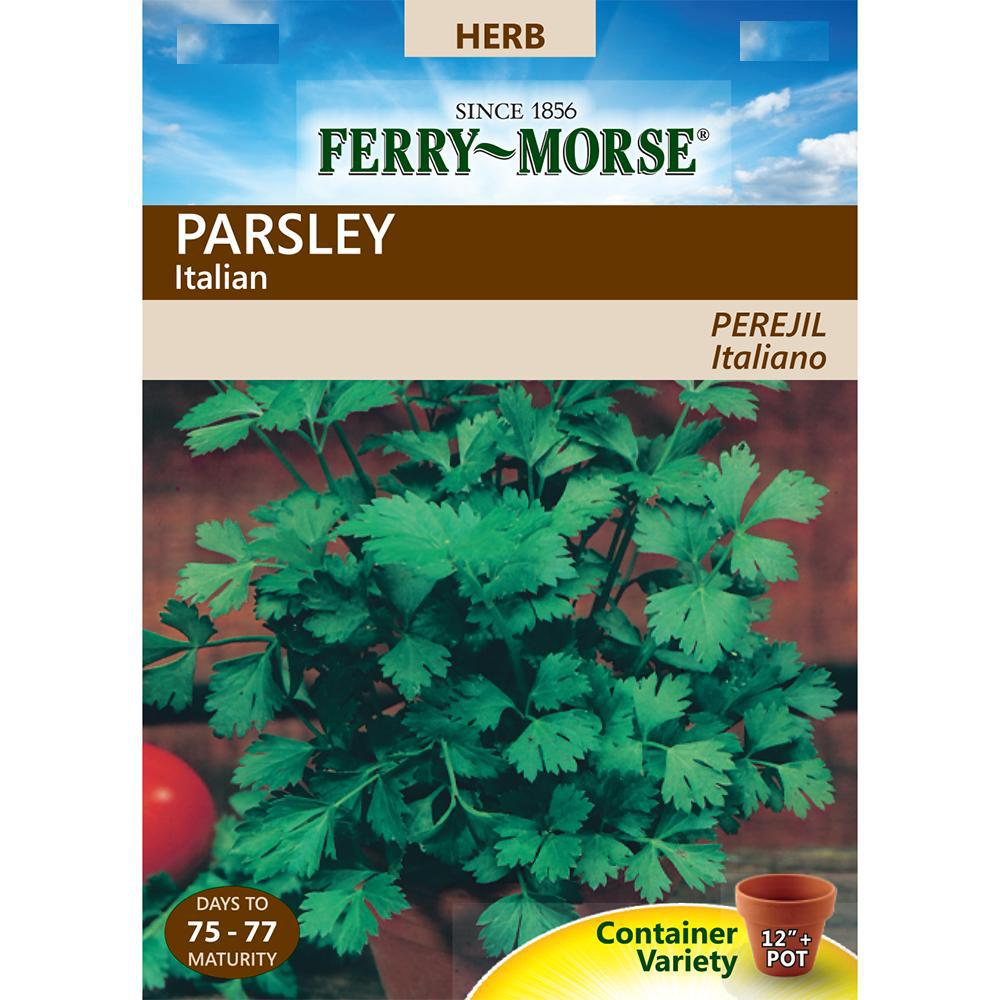 Parsley Single Italian Flat Seeds