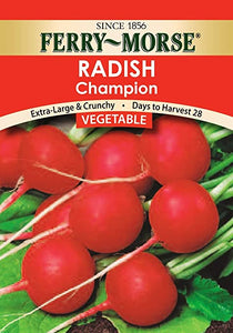 Radish Champion Heirloom Seeds