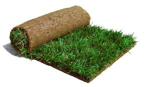 Tall Fescue Sod (10 Square Foot Roll)