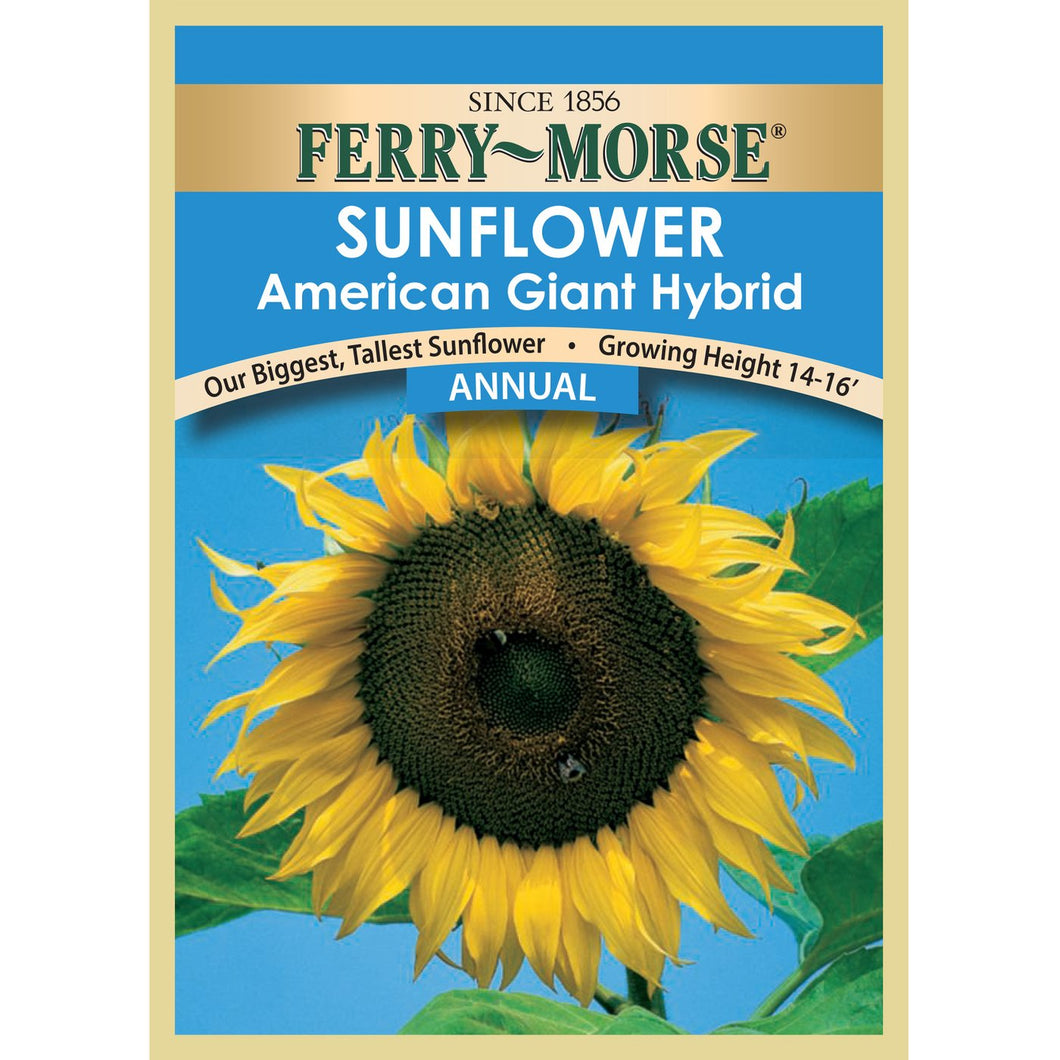 Sunflower American Giant Hybrid Seeds