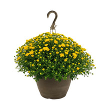 Load image into Gallery viewer, Mum Yellow Hanging Basket