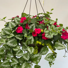 "Load image into Gallery viewer, 14"" Plastic Hanging Basket Bounce Impatiens"