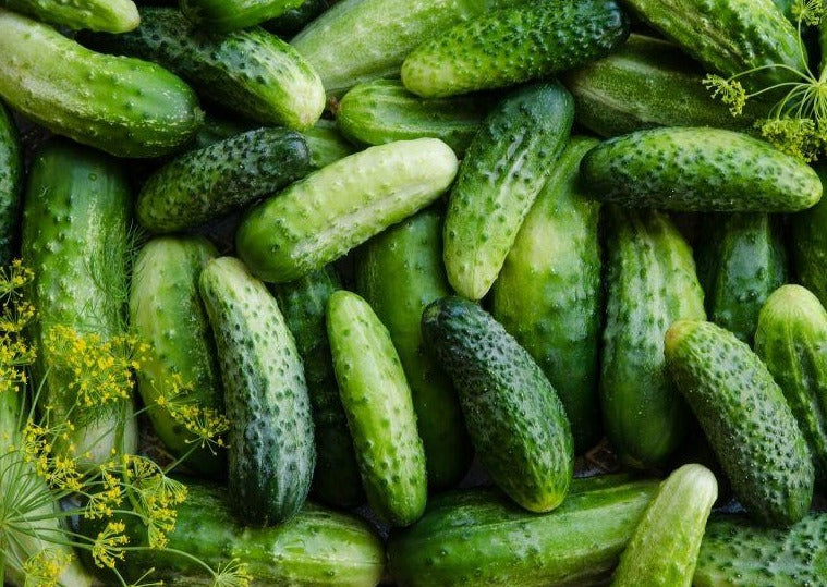 Kirby Pickling Cucumbers - Our Own!