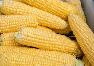 Yellow Corn - Our Own!