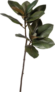 Magnolia Leaves w/ Buds Stem