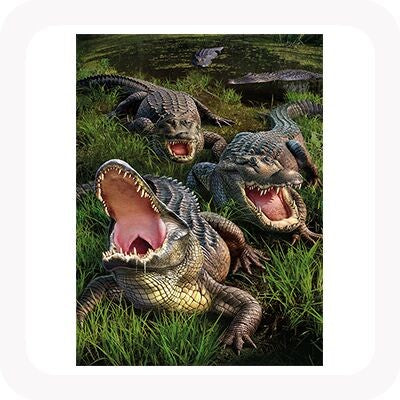 3D GATOR PICTURE / PLACEMAT
