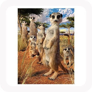 3D MEERKAT GAZE PICTURE / PLACEMAT