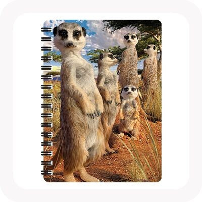 3D MEERKAT GAZE NOTEBOOK