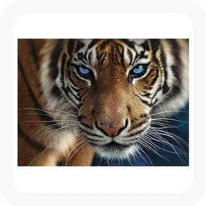 3D BLUE EYES PICTURE / PLACEMAT