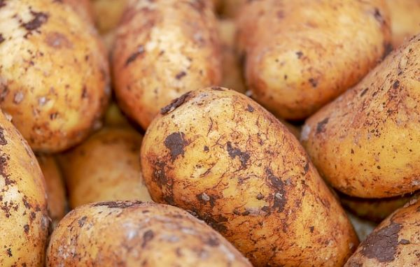 Loose Potatoes - Brushed - Mr Fresh Foods Pty Ltd