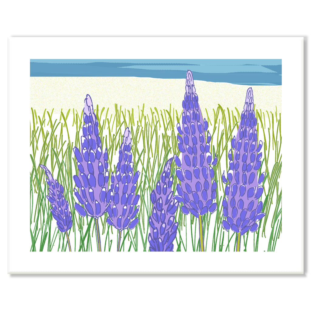 Lupines Print
