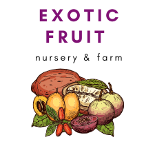 Exotic Fruit Nursery and Farm Gift Card