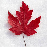 Canada Day and the Red Maple Leaf
