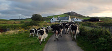 Load image into Gallery viewer, Wee Isle Dairy Pasturised Whole milk 1 Litre