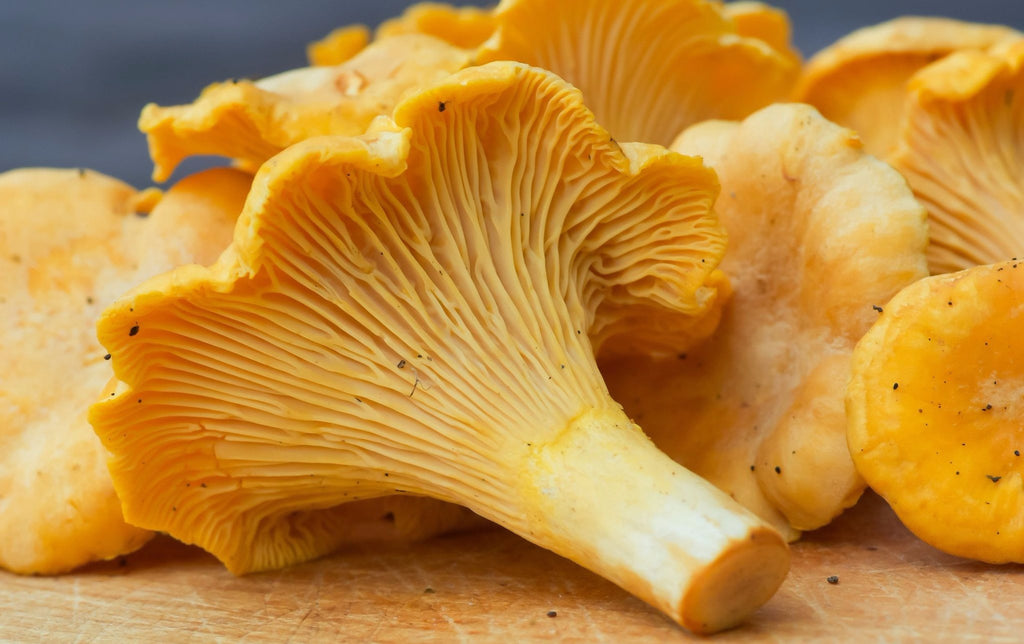 Fresh Golden Chanterelle