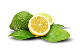 Citrus Bergamot Lowers Low Density Lipoproteins