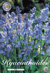 Bluebell Bulbs