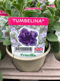 Double Petunia Collection