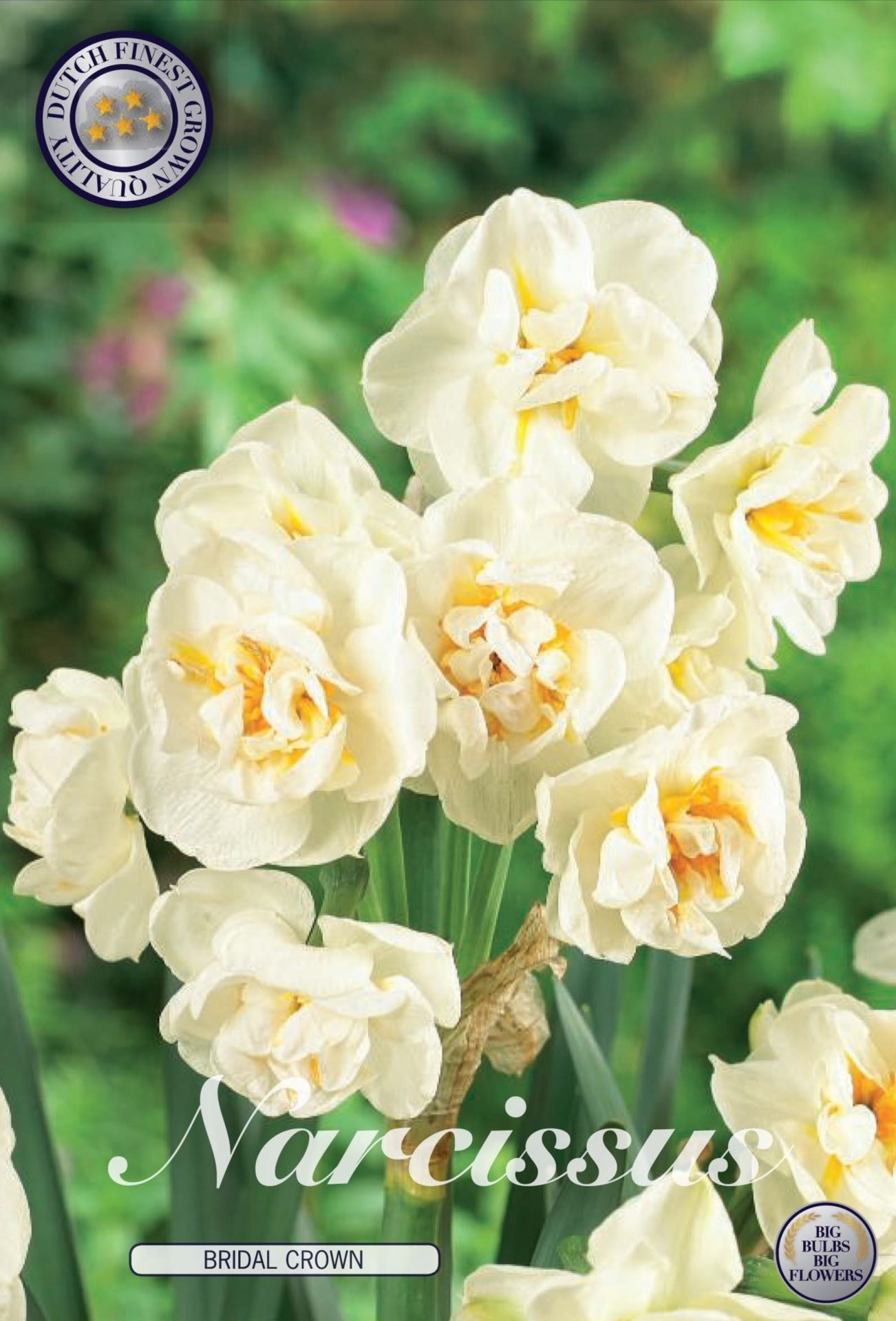 Narcissus Bridle Crown Bulbs