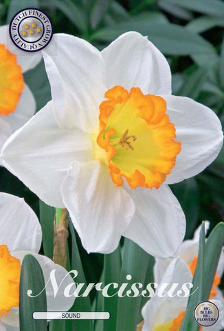 Narcissus Sound Bulbs