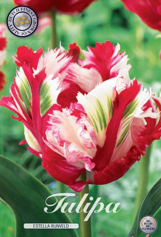 Tulip Estella Rijnveld Bulbs