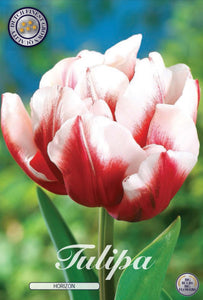 Tulip Horizon Bulbs