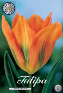 Tulip Orange Emperor Bulbs