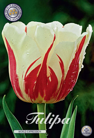 Tulip World Expression Bulbs