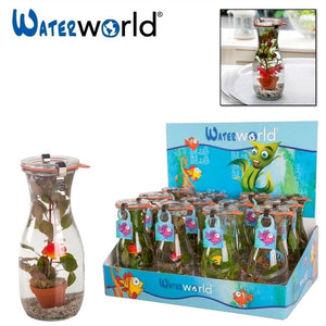 Waterworld Aquarium Plant