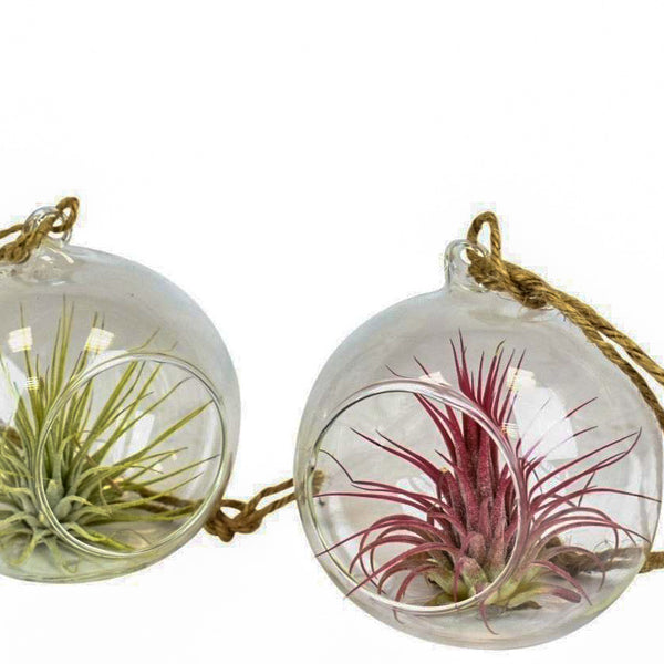 Glass Living Bauble