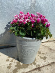 Large Goblet Cyclamen Olive Planter