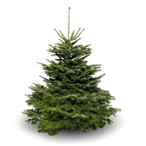 Final Payment - Nordmann Fir Premium Cut 6/7ft