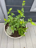 Red Heart Hibiscus Rope Planter