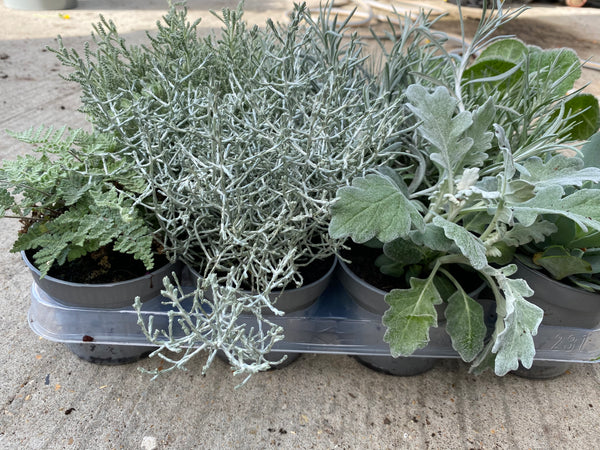 Large Autumn Silver Foliage Kit