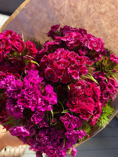 English Sweet William Bouquet