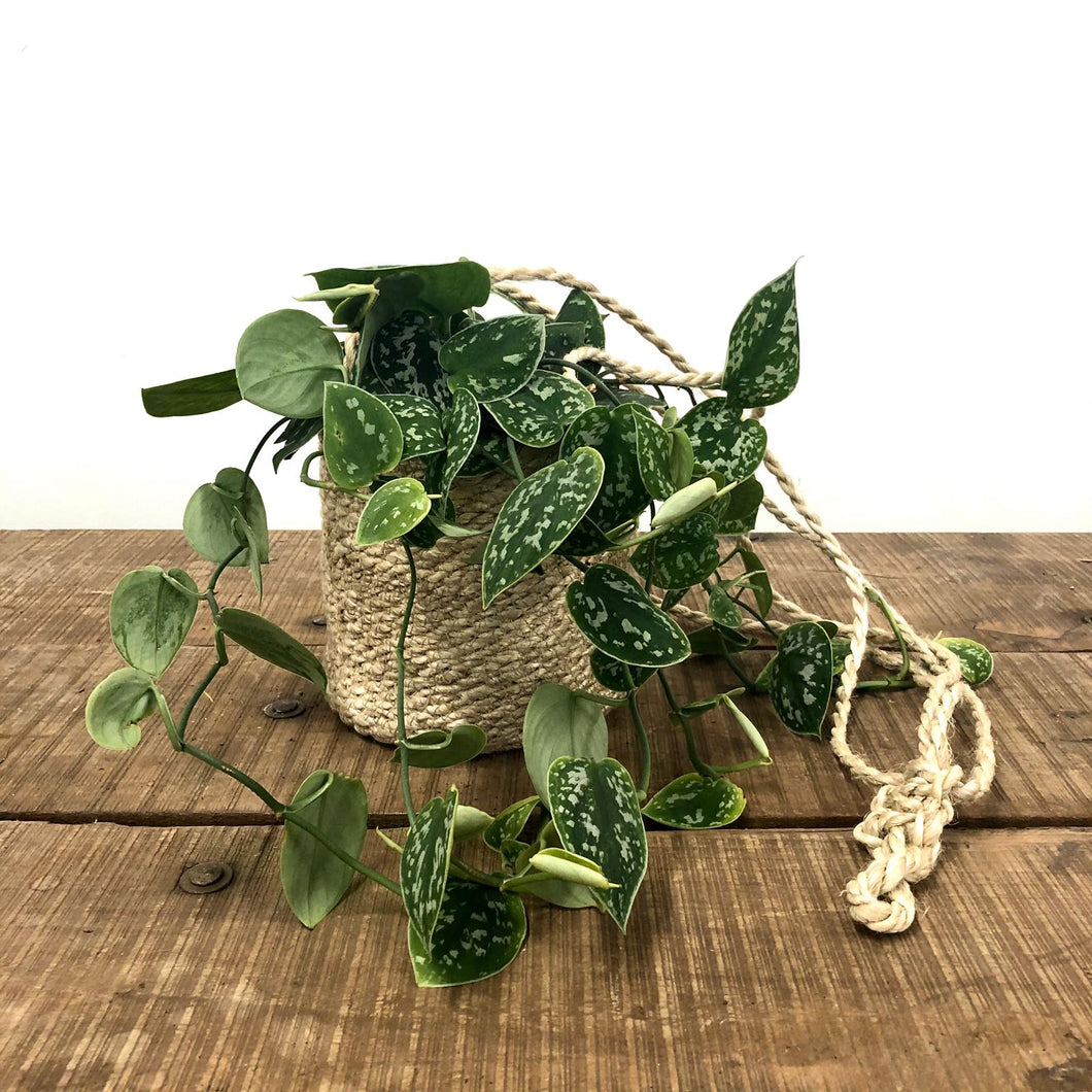 Jute Hanging Basket - Tall