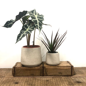 Light Grey Tapered Concrete Pot