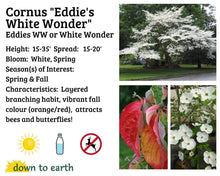 Load image into Gallery viewer, Cornus 'White Wonder' #25