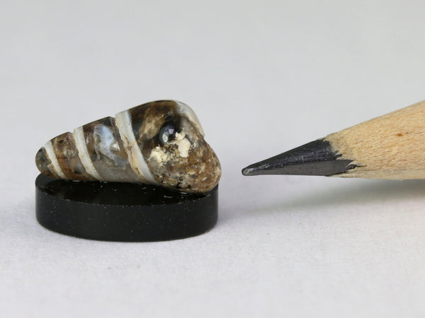 Tiny fossil turitella shell,  1:12 or 1:24 scale.