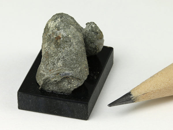 Miniature dollhouse fossil rams horn oyster, Texas, end view 1