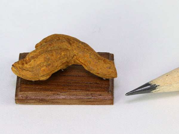 Possible fossil coprolite (poop!), 1:12 scale