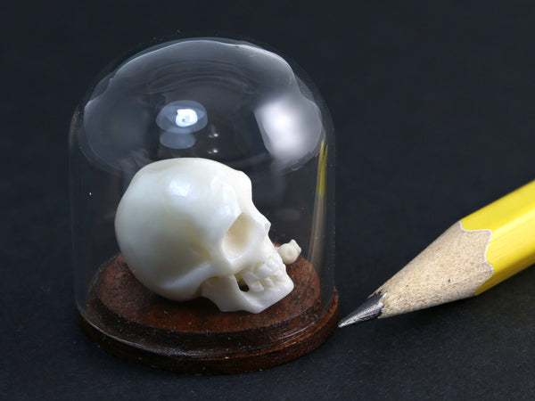 Tiny skull & bones under miniature glass dome, side view