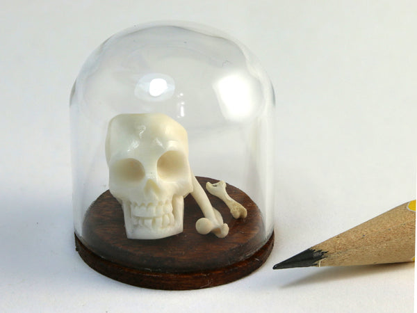 Dollhouse miniature 1:12 scale skull and bones curiositiy